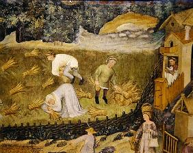 Harvesting sheaves of grain