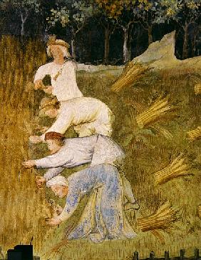 Harvesting wheat, detail