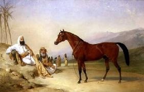Two Bedouin with a Bay Arab Stallion in the Desert