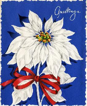 Vintage Illustration of Christmas Poinsettia