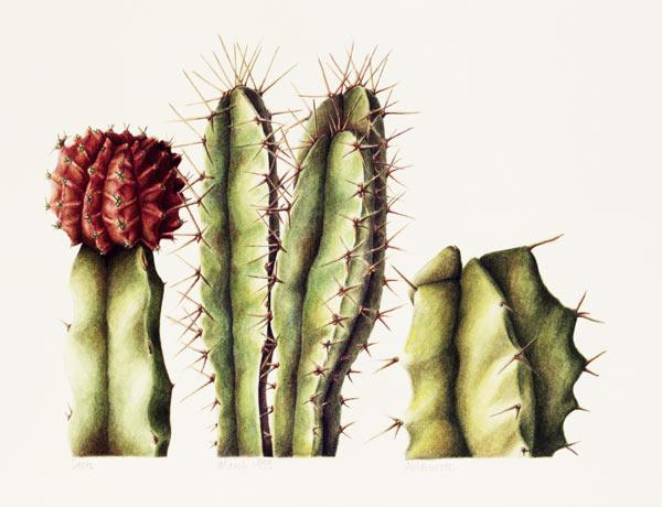 Cacti, 1999 (w/c on paper)
