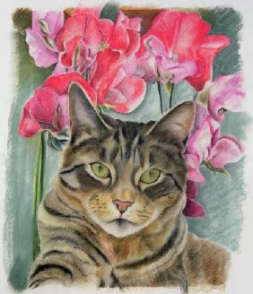 Cat with sweet peas