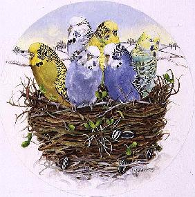 Budgerigars in a Nest, 1995 (acrylic)