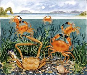 Crabs in the Ocean, 1997 (acrylic on paper)