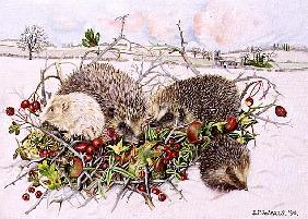 Hedgehogs in Hedgerow Basket, 1996 (acrylic on canvas)