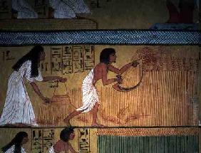 Detail of a harvest scene on the East Wall, from the Tomb of Sennedjem, The Workers' Village, New Ki