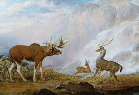 Earl of Orford's Elk, Antelope and Stag