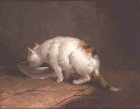 The Artist's Cat Drinking