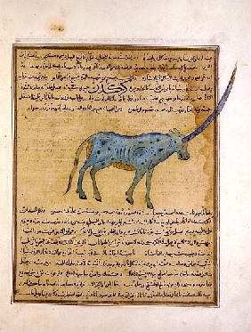 Ms E-7 fol.191b Rhinoceros, illustration from ''The Wonders of the Creation and the Curiosities of E