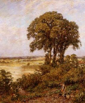 Landscape in Sussex