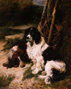 Brown and White and Black and White Spaniel