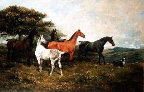 Mares and Foal with a Sheepdog