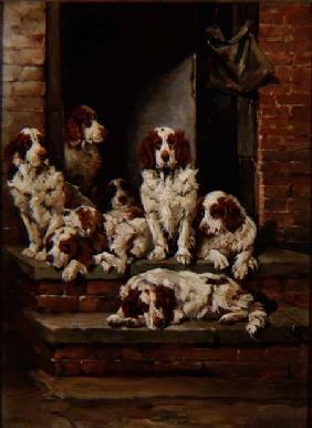 Spaniels Galore