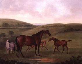 Mare with Foals in a Landscape