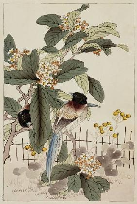 Blue tailed birds among the blossom from Bunrei Kacho Gafu