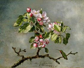 Apple Blossoms and a Hummingbird