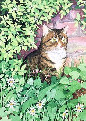 Jackie''s Cat (garden design)