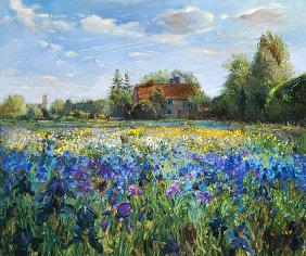 Evening at the Iris Field  - Timothy  Easton