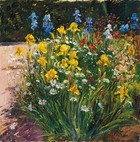 Oxeye Daisies Against the Irises (oil on canvas)