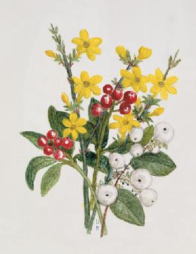 Snowberries, Dogwood and Jasmine (w/c on paper)