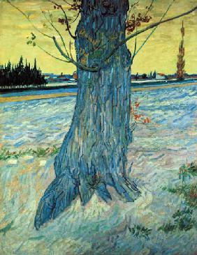 van Gogh / The Tree / 1888