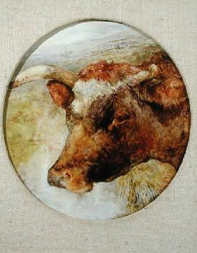 Head of a Longhorn Cow