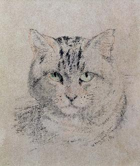 Tabby Cat, 1874 (pencil, crayon and